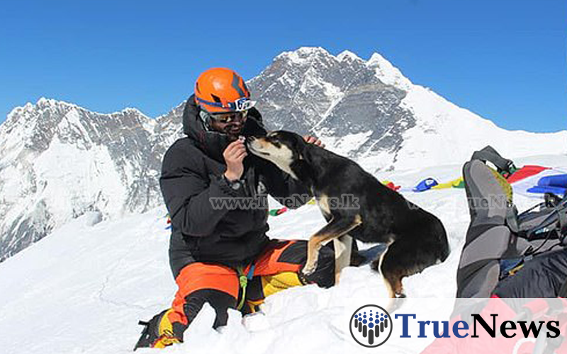 the-first-dog-ascent-of-a-7000-meter-himalayan-peak